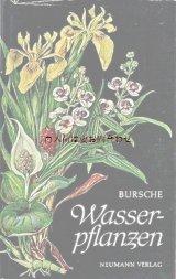 楽しい古本★  水草  水草の小さな植物学 イラスト Neumann 植物図鑑
