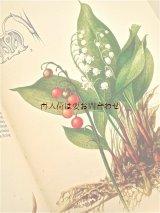 楽しい古本 洋書★ ナチュラル 図鑑 有毒植物 ボタニカルアート