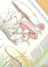 楽しい古本☆ キノコ図鑑 童話の様なきのこ画 DDR