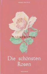 楽しい古本☆ 最も美しい薔薇達の本 バラ 図鑑 イラスト アート