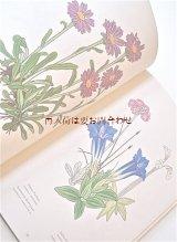 楽しい古本☆ ボタニカル アート 木版画 アルプス 高山植物
