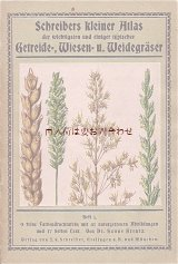 アンティーク★ ボタニカル リアルな植物画の小さな本 穀物 牧草地の草 冊子