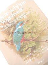 楽しい古本   自然 小鳥の本 美しい野鳥 イラストページ多数 図鑑 60年代