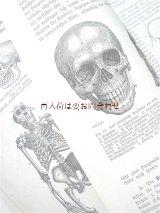 アンティーク洋書 ☆ 動物学 人体 イラストページ多数 ガイド 1912年