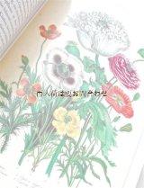 楽しい古本☆  Margot  Schubert コレクション 植物画 豪華イラストページ多数  おまけ付