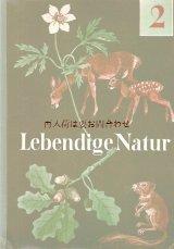 楽しい古本★ 子鹿とリス柄 レトロな自然の本 ナチュラルイラスト 写真