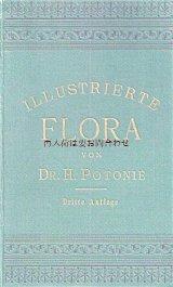 アンティーク洋書★ Dr. H.Potonié 北部•中部ドイツの植物  イラスト 植物•古植物学
