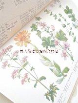 アンティーク洋書☆ ヒーリング植物 イラスト多数 カラー モノクロ 1914年
