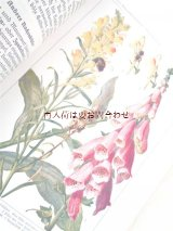 楽しい古本★  植物学の参考書 カラー イラスト図版 多数 1937年