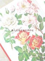 楽しい古本☆ カラフル イラストページ多数 デンマークからのバラ図鑑  ドイツ語版 ボタニカル 植物画
