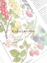楽しい古本☆  野菜や果物イラストの素敵な本 レトロ イラスト 80年代