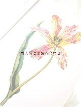 アンティーク洋書★ ボタニカル アート   チューリップの本