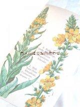 アンティーク洋書☆ヒーリング植物ガイド ボタニカルアート イラスト多数 30年代