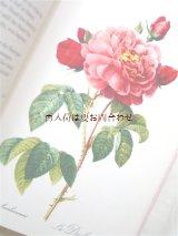 楽しい古本☆ルドゥーテのバラの絵×薔薇に関する詩や小説 素敵なアンソロジー♫ バラの切手付