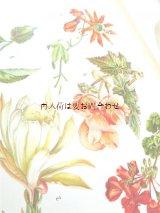楽しい古本☆  観葉植物 窓辺の植物 図鑑 ボタニカル アート  植物画多数