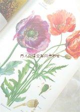 楽しい古本 洋古書★ 植物画 イラスト多数の図鑑 植物 コケ シダ キノコ