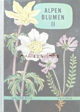 楽しい古本洋書☆ アルプスの植物II 植物画  スイス 高山植物図鑑 ボタニカル アート