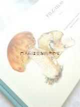 楽しい古本★ スイス 絵本のような図鑑 キノコの本 Pilz -Atras ボタニカル アート