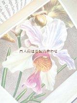 楽しい古本★ 蘭の本 スイスの大きめ図鑑 イラスト多数 葉 蘭 ボタニカル アート