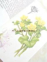 楽しい古本☆ 毒を持つ植物の本 図鑑 イラスト多数 ボタニカル アート
