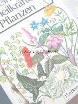 アンティーク洋書☆ 大型古書 植物のヒーリングパワーと秘密 ハーブ 薬草 有毒植物 図鑑