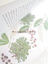 楽しい古本 洋古書★ 美品  木 樹木の本 図鑑 果実 花 イラスト多数