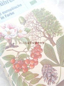画像1: 楽しい古本★ ヨーロッパの木の図鑑 400種以上 葉 花 種子etc 自然ガイド
