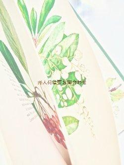 画像1: 洋古書★植物図鑑  ボタニカル 大きなイラストの木の図鑑 木と低木の本 イラスト多数 1967年