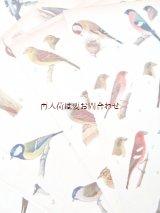 楽しい古本洋書☆ 難有り お手頃 中央ヨーロッパの野鳥と卵の図鑑 イラスト 900点 印刷物