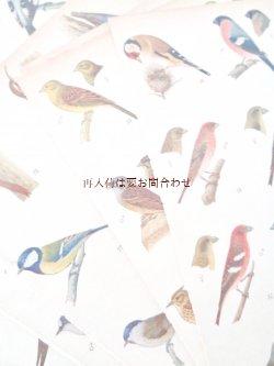 画像1: 楽しい古本洋書☆ 難有り お手頃 中央ヨーロッパの野鳥と卵の図鑑 イラスト 900点 印刷物