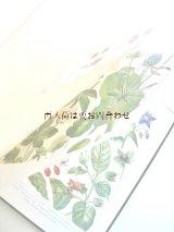 アンティーク洋書☆100年前の古書  植物学の手引き ボタニカル  アート 植物画 イラスト 多数