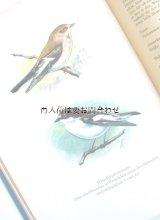 楽しい古本 洋書★  50年代  ナチュラル  野鳥  小鳥  鳴鳥の本   カラーイラスト  82図版  ドイツ