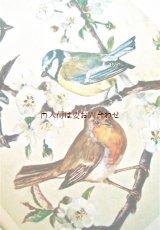 楽しい古本☆ 家 中庭 庭 の小鳥の本 保護 自然 ナチュラル古書 60年