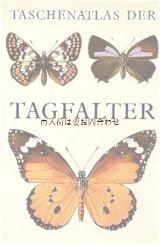 楽しい古本★  おしゃれな蝶々イラストの古書 イラスト多数