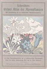アンティーク★ アルプスの植物 カラー図版 高山植物 アルプスの花ガイド 冊子