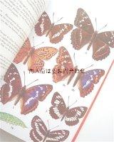 楽しい古本☆ 蝶々 図鑑 1500点以上 カラーイラスト
