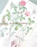 アンティーク洋書★ 農業学校 作物学 虫や植物 野菜 ボタニカル 農作 教本 1917年