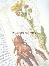 楽しい古本★   リアルな植物画 ヒーリング植物図鑑 Natur in Farbe シリーズ 薬草 有毒植物  ハーブ