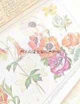 アンティーク☆  イラストの素敵な植物図鑑 庭に咲く植物 ボタニカル イラスト 多数