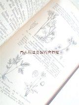 アンティーク洋書★希少 Dr. H.Potonié 北部•中部ドイツの植物  イラスト 植物•古植物学 1887年