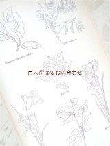 楽しい古本洋書★ 自然ガイド イラスト イタリアの植物 動物 昆虫他