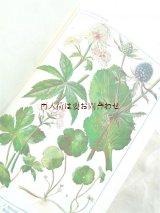 アンティーク洋書★美•挿絵 植物学 カラーイラスト図版多数   ボタニカル  初版