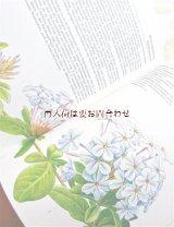楽しい古本★ 観葉植物 蔓植物 植物画 イラスト ボタニカル アート