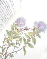 楽しい古本★  ボタニカル アート 植物 ガーデニング 花図鑑  ロックガーデン 石の庭