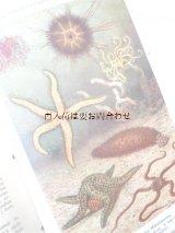 アンティーク洋書 ☆ 動物学 人体 生物 イラストページ多数 人類学