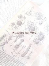 アンティーク洋書★ 真菌類の本 小さな教科書  レアなイラスト付