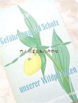 楽しい古本★ 野生の植物 危険性と保護 モノクロ イラストページ多数 蘭 薬草 セイヨウキンバイソウ etc