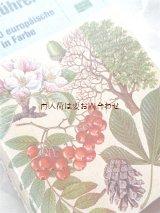 楽しい古本★ ヨーロッパの木の図鑑 400種以上 葉 花 種子etc 自然ガイド