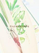 洋古書★植物図鑑  ボタニカル 大きなイラストの木の図鑑 木と低木の本 イラスト多数 1967年