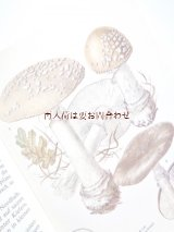 楽しい古本☆ レトロなキノコの本 カラー図版  図鑑 イラスト多数